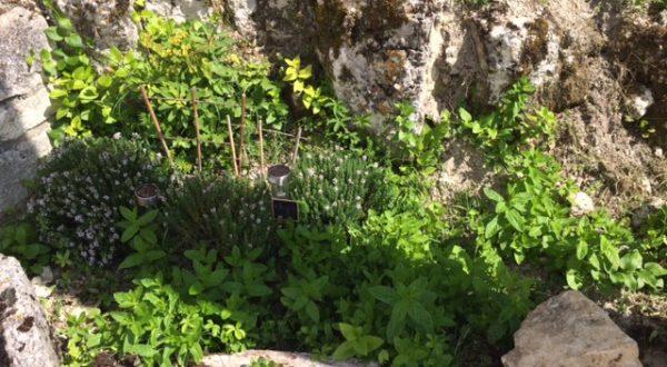 jardin lanies